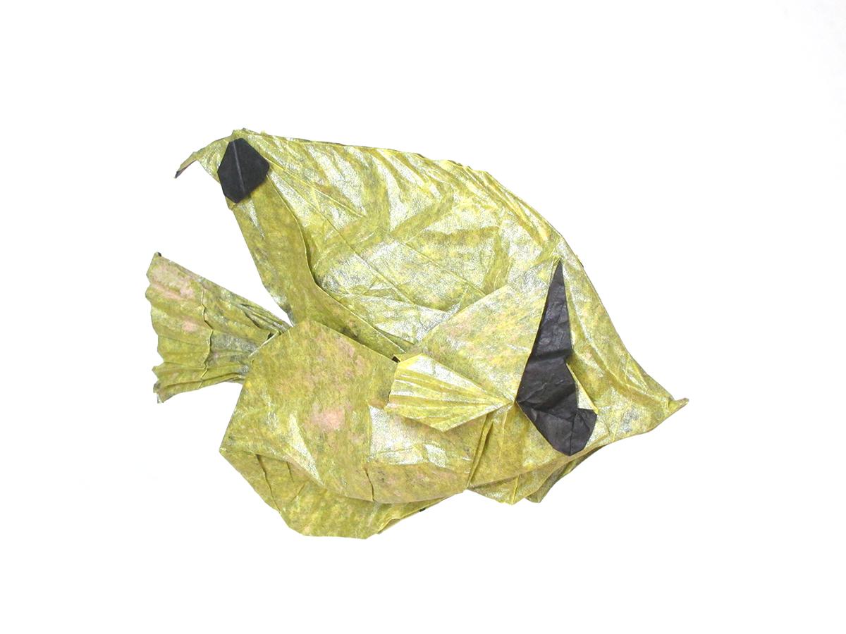 Threadfin Butterflyfish by Winston