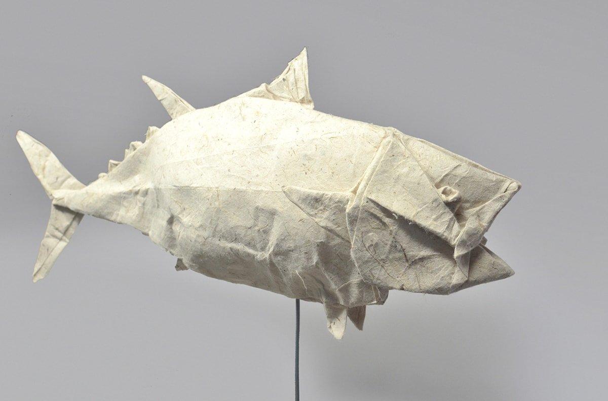 Pacific Bluefin Tuna by Kei Watanabe