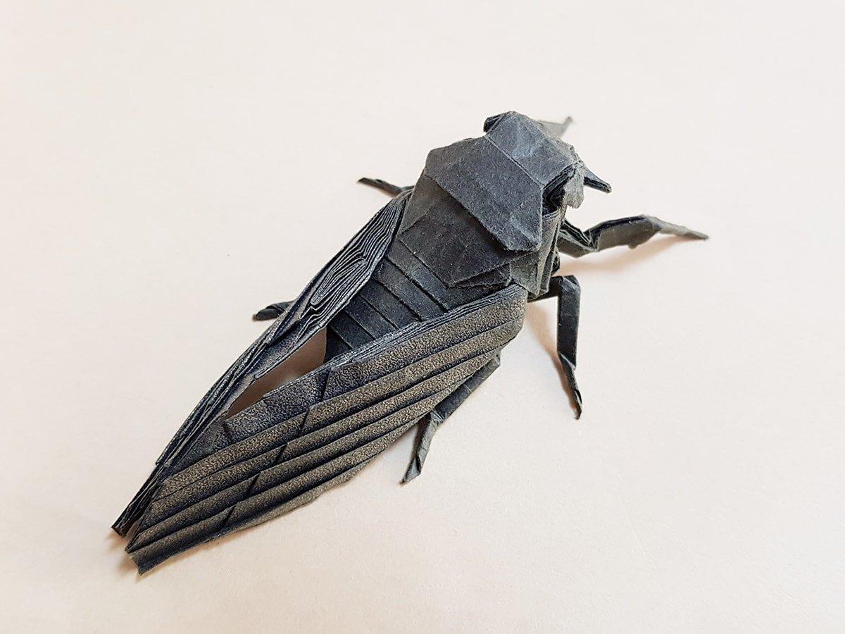Cicada by Kota Imai