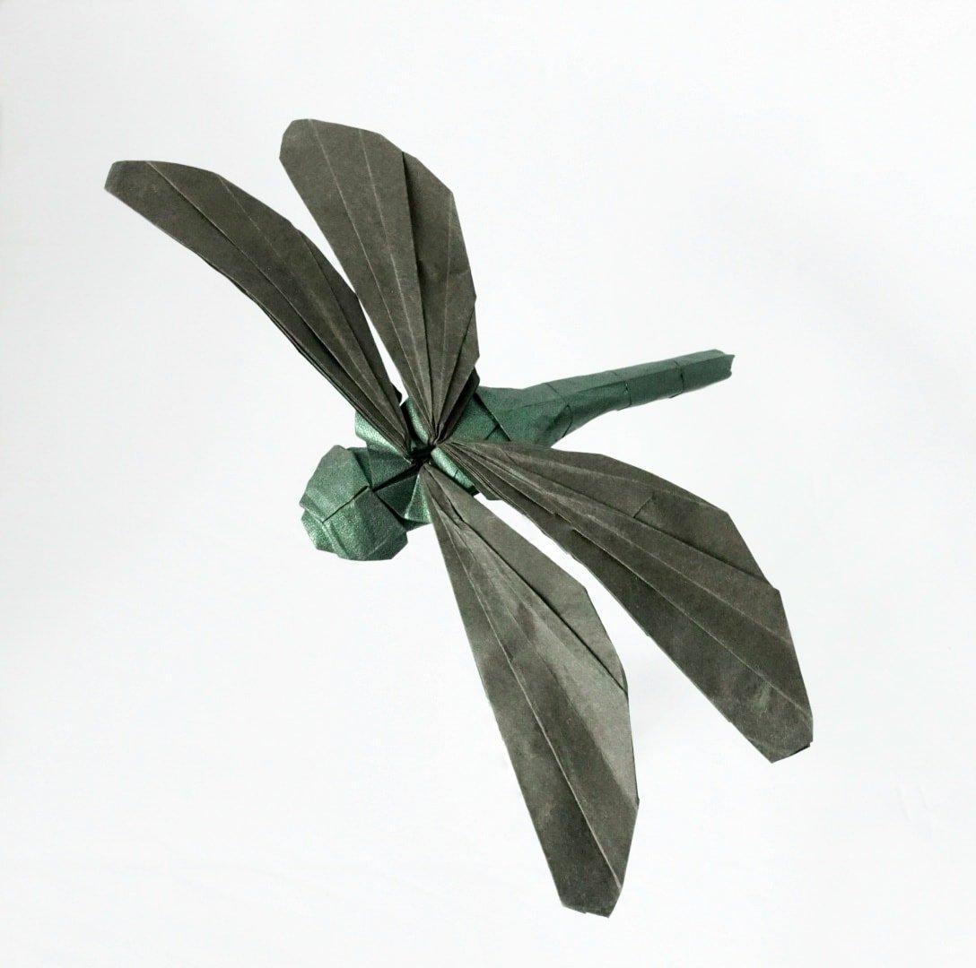 Dragonfly by Shuki Kato