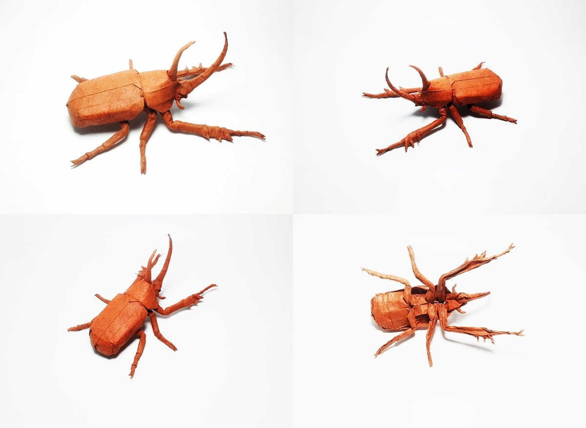 Golofa Beetle