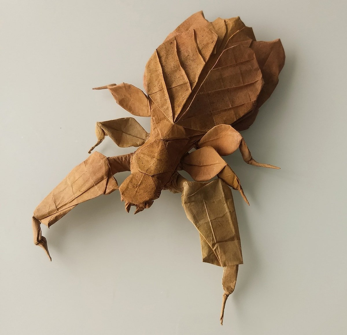 Leaf Insect by Kota Imai