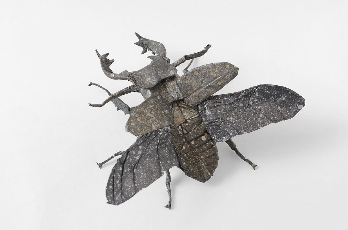 Stag Beetle by Kei Watanabe